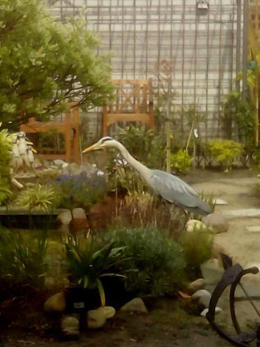 23Reiger in de tuin