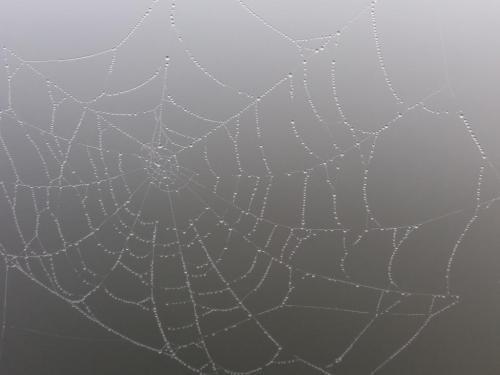 Spinneweb_in_de_mist